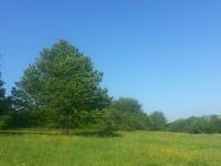 arbre de vie, racines, centrage, équilibre