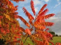 feuilles couleur d'automne